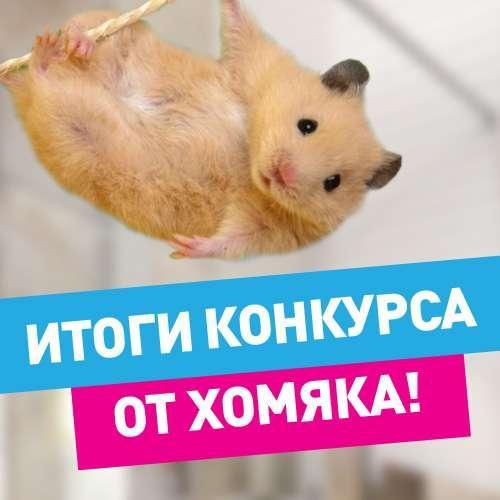 Поздравляем победителей конкурса от Хомяка!